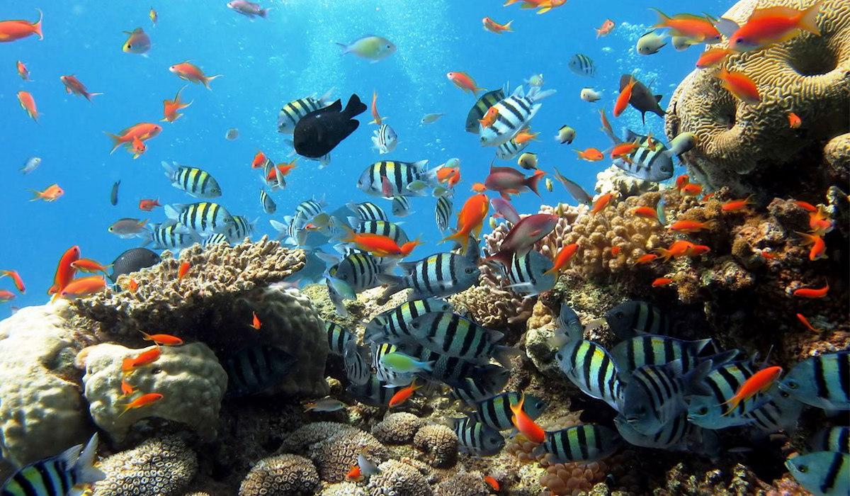 Дайвинг (гмуркане) в Червено море