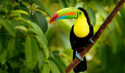 Коста Рика - приключенски рай