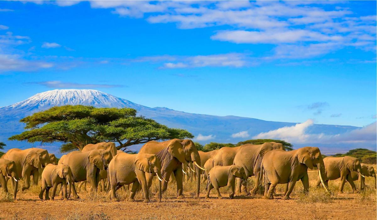 Сафари в Танзания и почивка в Занзибар